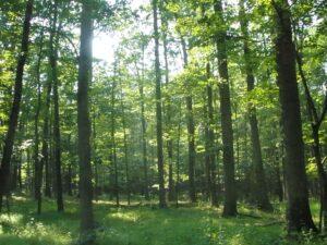 יערות, עולם קסום