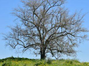 עצים, עמוד שדרה